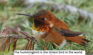 La leyenda del colibri